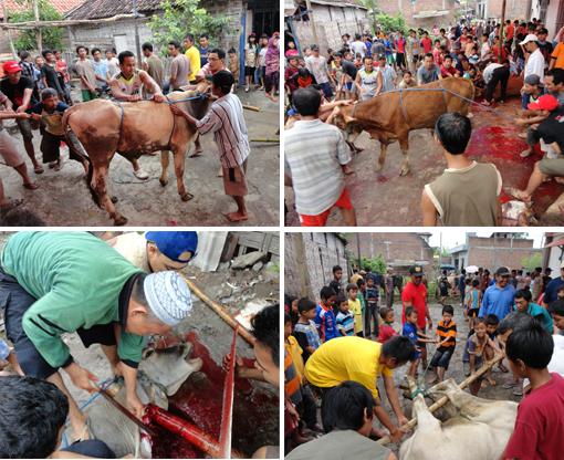 Penyembelihan hewan qurban warga LDII Surabaya